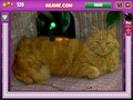 Free Download Jigsaw World Kittens Screenshot 1