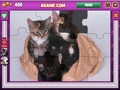 Free Download Jigsaw World Kittens Screenshot 2